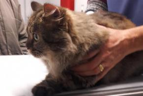 Discovery alert Cat Female Elie United Kingdom