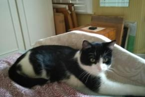 Alerte Disparition Chat Mâle , 4 ans London Borough of Hammersmith and Fulham Royaume-Uni