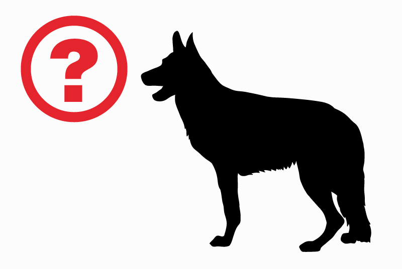 Discovery alert Dog miscegenation Male Le Cerneux-Péquignot Switzerland